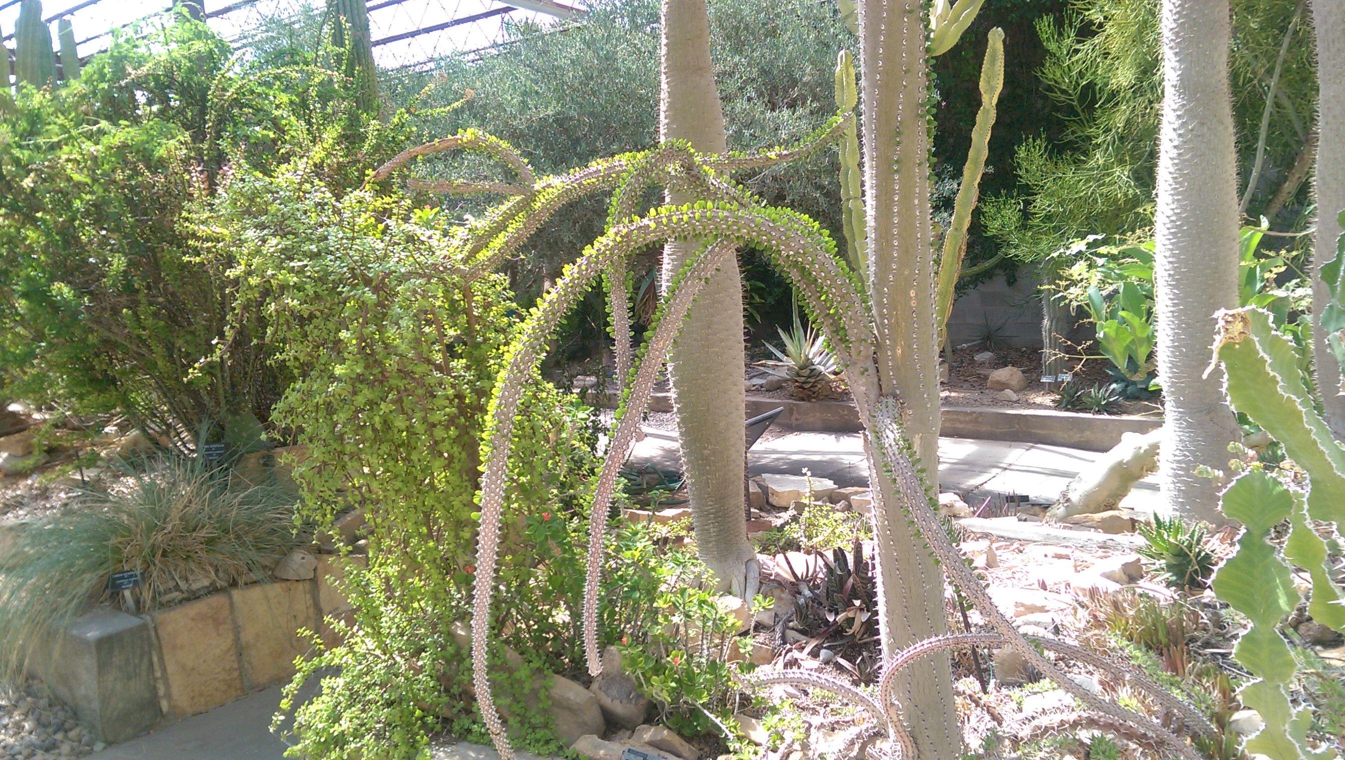 bafa0b6d933da75743c7d5e31bae8fd6 - Living Desert Zoo And Gardens Carlsbad Nm