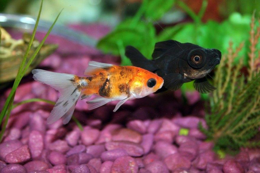 Free Fish Food Sample Pet Fish Aquarium Set Fish Plants