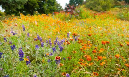 Wildflower Garden Ideas wildflower garden design plush design ideas 11 garden with wildflower with paved path leading to gazebo Beautiful Wildflower Gardens How To Grow