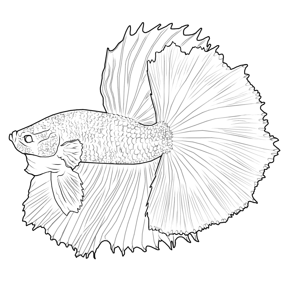 Betta Fish Coloring Page To Make Coloring Pages Pinterest