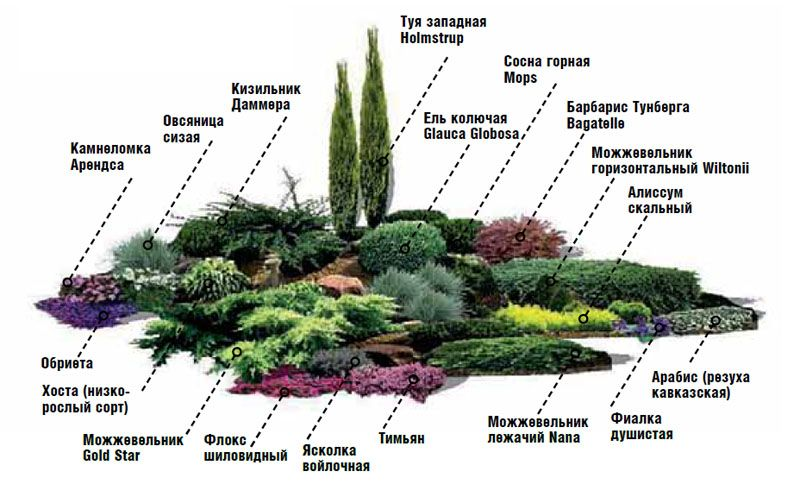 148Композиции растений в ландшафтном дизайне на