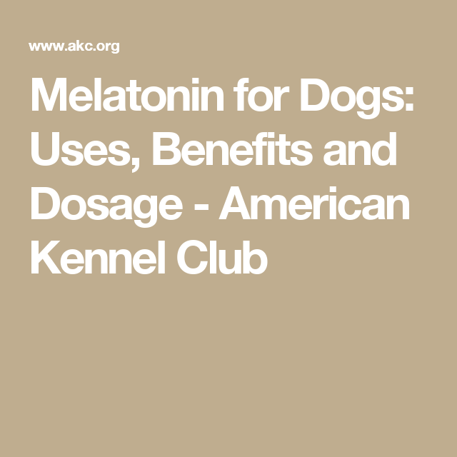 Melatonin For Dogs Uses Benefits And Dosage Westie S
