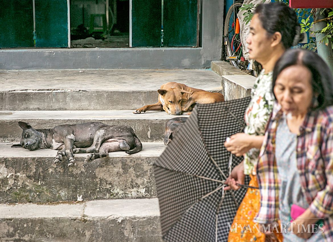 A dog shelter will be built in Nay Pyi Taw to provide a