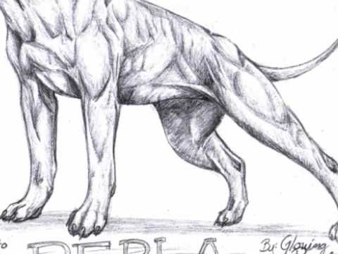 How To Draw Pitbull Dog Step By Step Face Step By Step Face Is A