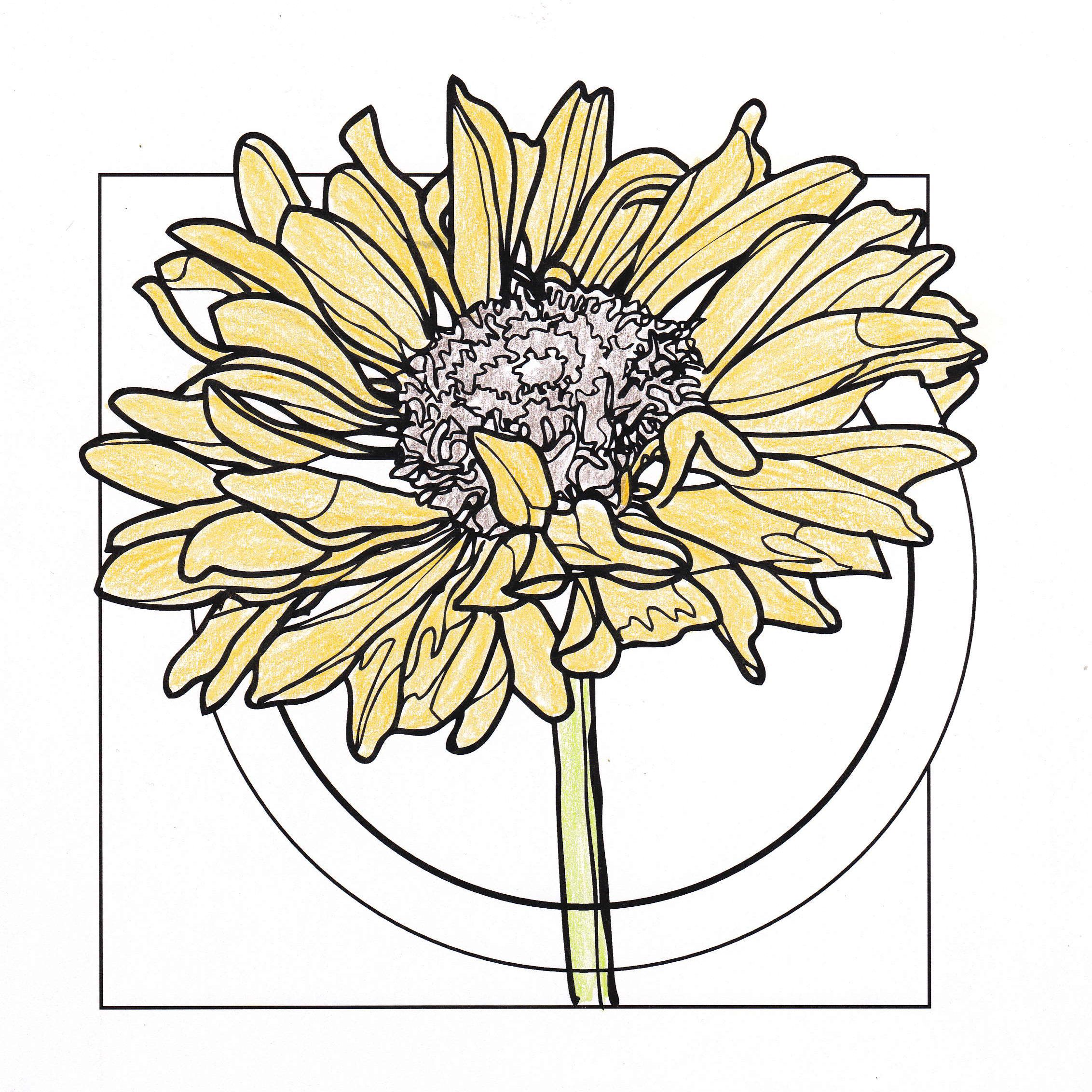 Line Drawing Yellow Flower Drawings Pinterest Drawings