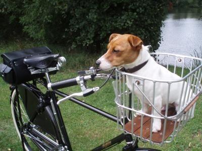 Brooks Hoxton basket plus dog!