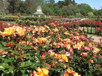 Victoria State Rose Garden Werribee Park Garden Rose Garden Outdoor