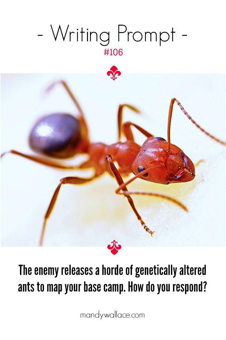 Writing Prompt 106 Enemy Ants Mandy Wallace Fire Ants Types Of Ants Lawn Pest Control