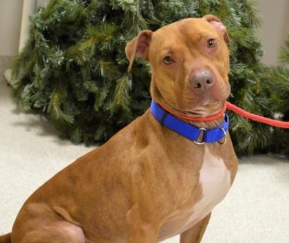 Adopt Ace on Adoptable Dogs at the Burlington County