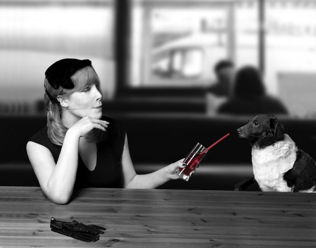 Free image on pixabay dog dog advisor nonfiction