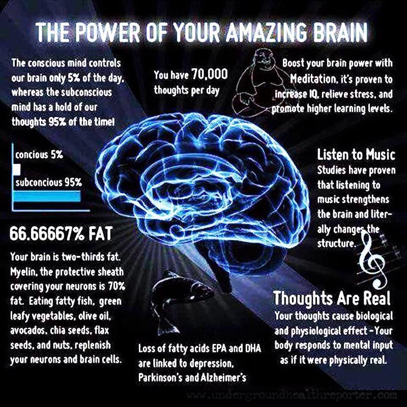 The power of the amazing brain | Brain facts, Healthy brain, Brain science
