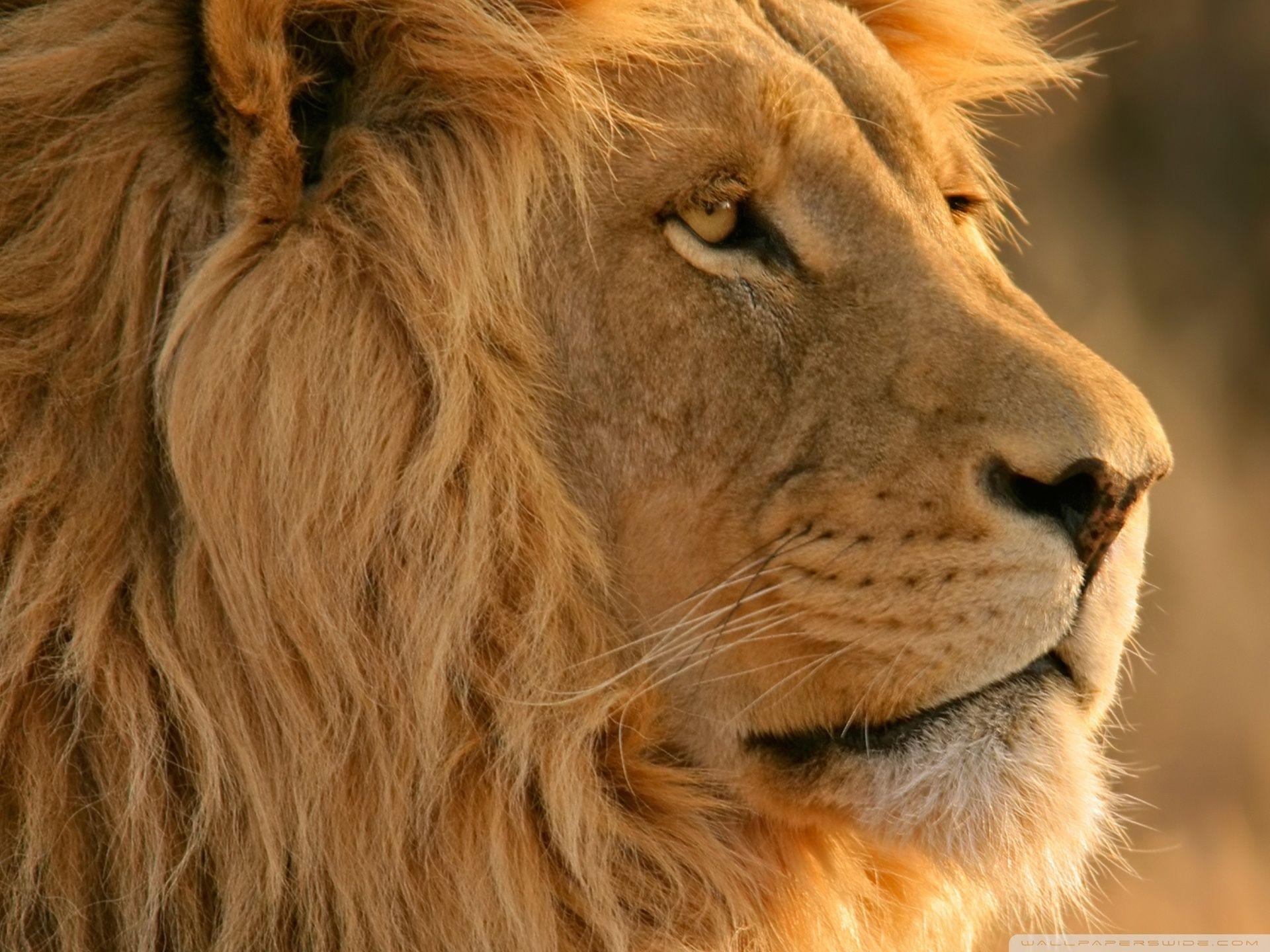 Apple Lion Wallpaper