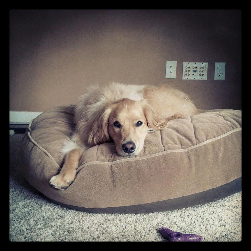 My Dog Murphy Really Enjoys His New Eddiebauer Dog Bed