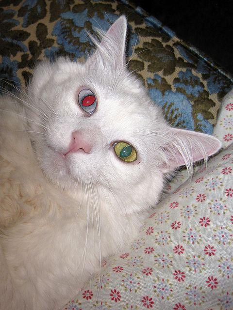 B- showing off his heterochromia