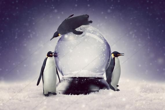 2-PACK! Fun with Penguins Winter Background for Photographers / Christmas Backdrop for Photography / Digital Downloads & Overlays #backdropsforphotographs