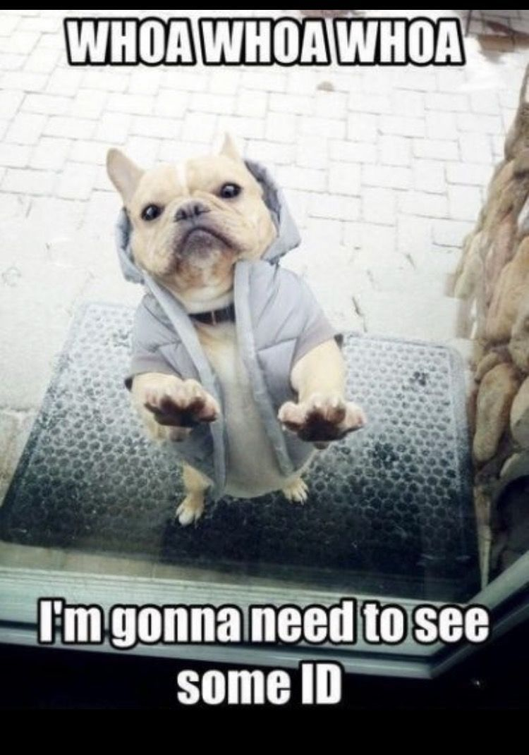 We Are Obsessed With These Memes Something About French Bulldogs Squishy Funny Faces And Their Clown Personalities M Cute Animals Funny Animals Bulldog Funny