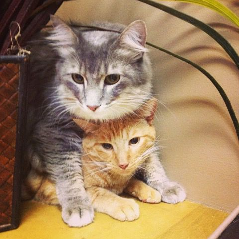 Best Friends Share Everything Even Trips To The Vet Call Today For Your Felines Annual Appointment 334 285 3331 Animal Photo Pets Feline