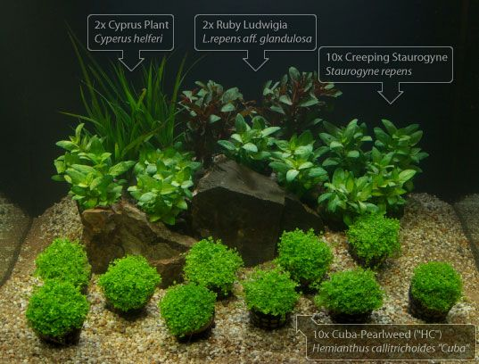 Aquarium Plant Set Aquascape