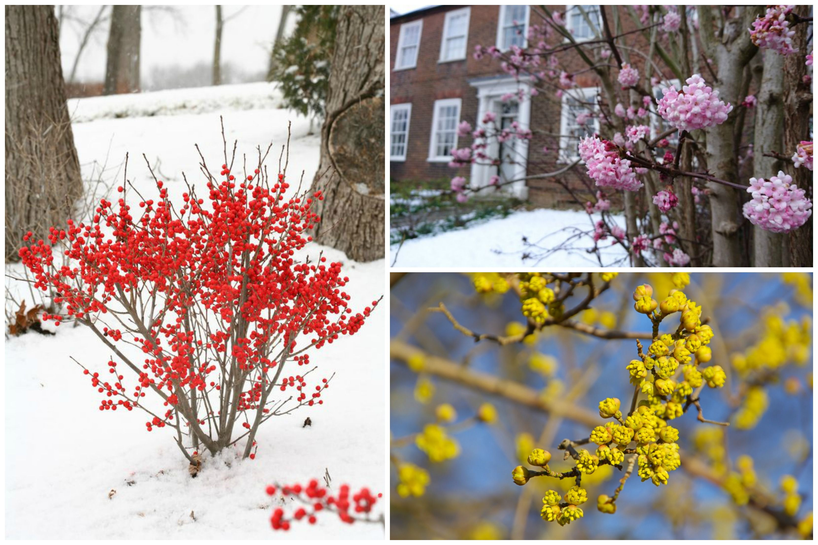 11 Winter Plants That Will Survive The Cold Weather Winter Plants Cold Weather Plants Outdoor Winter Plants