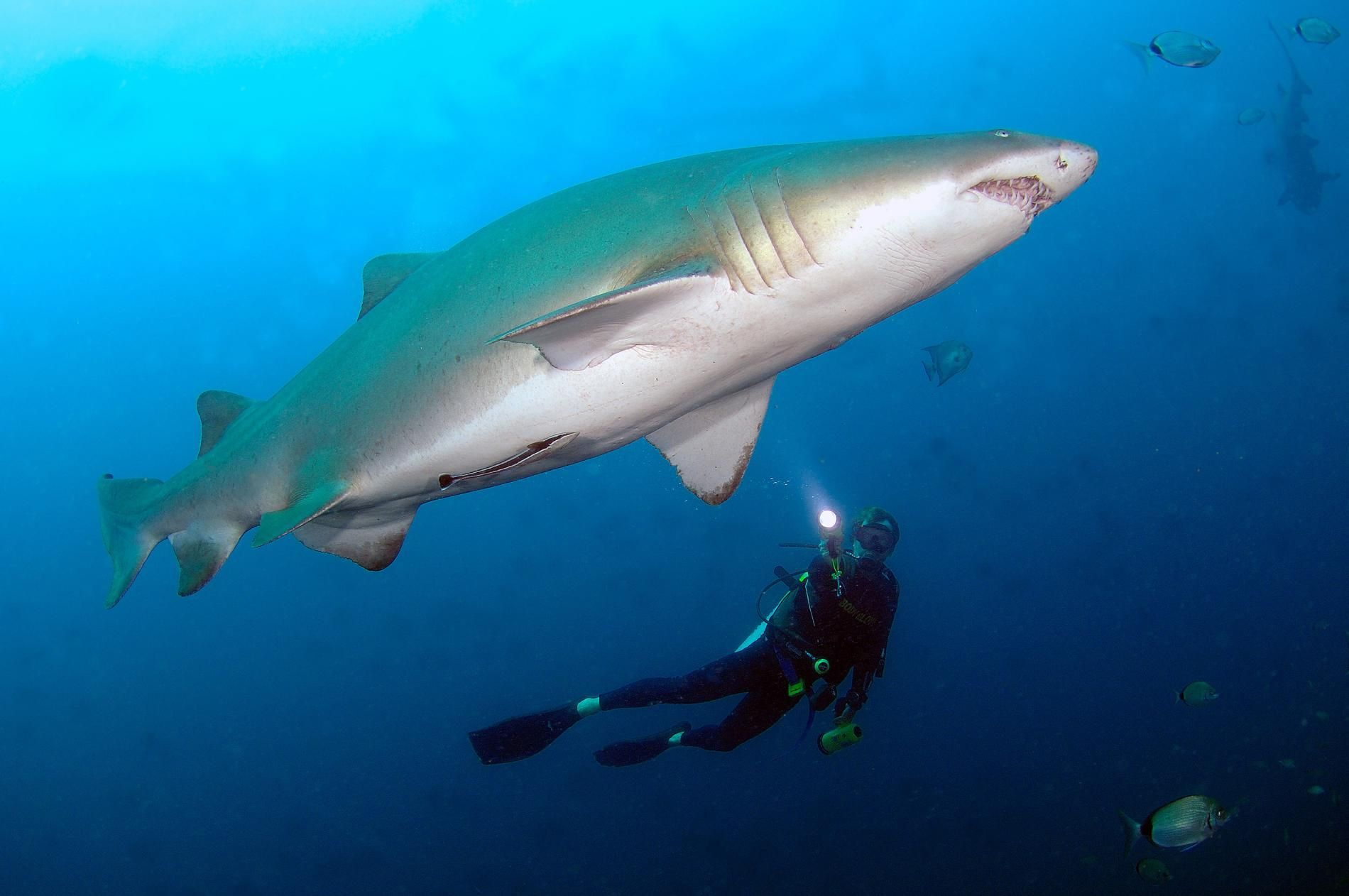 Where to Dive with Sharks and Shipwrecks | EXTREME ADVENTURE
