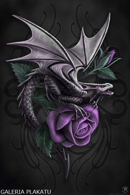 Anne Stokes Purpurowa Roza I Smok Plakat 61x91 5 Anne Stokes Dragon Dragon Pictures Dragon Rise