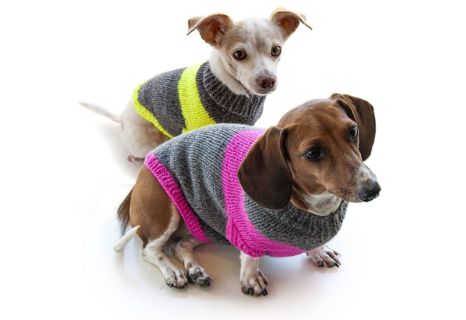 12 Dog Sweaters and Other Knitting Patterns for Pups ...