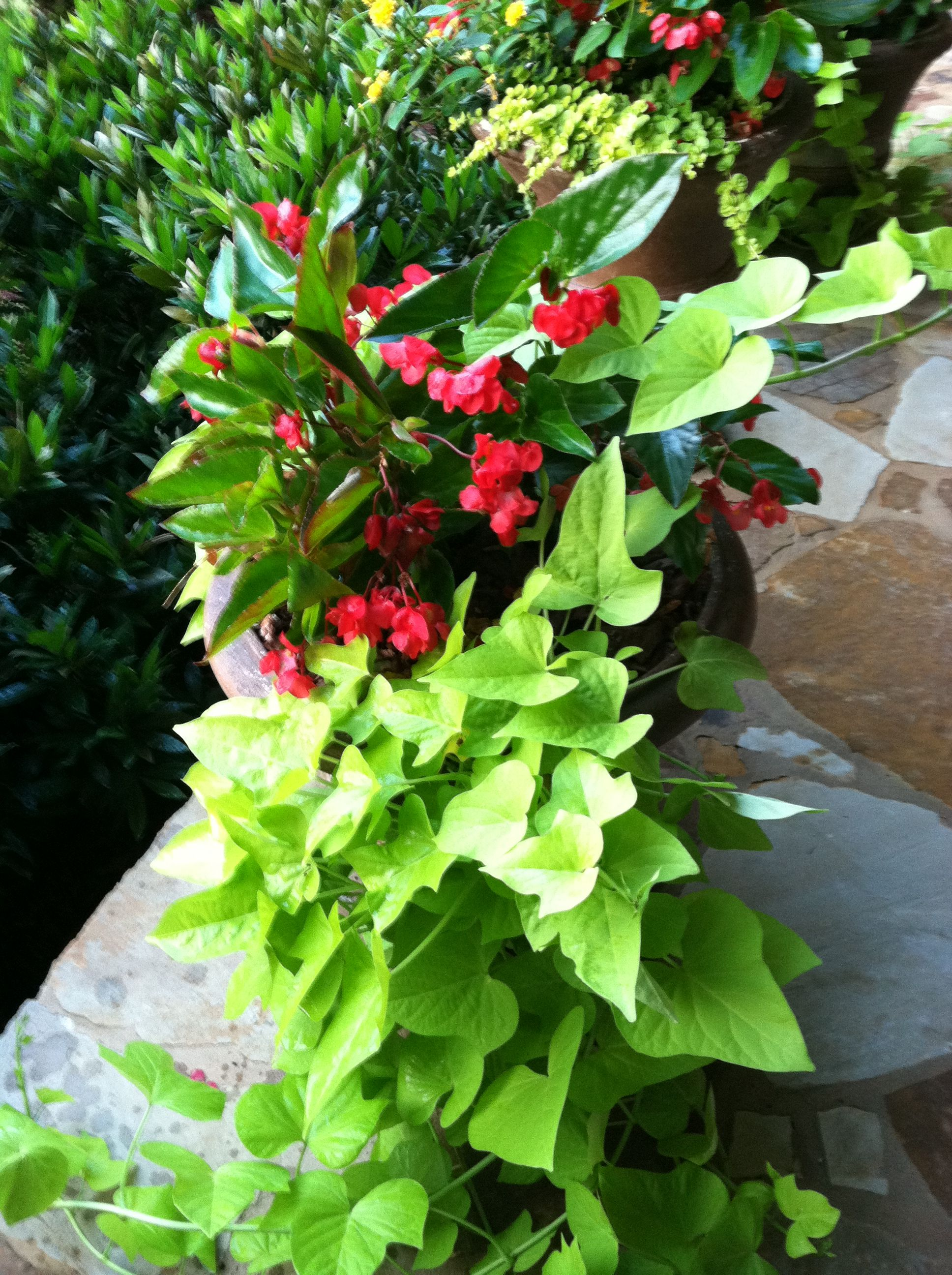 Pin By Ann Richardson On My Landscape And Container Gardens Container Gardening Flowers Trees To Plant Container Plants