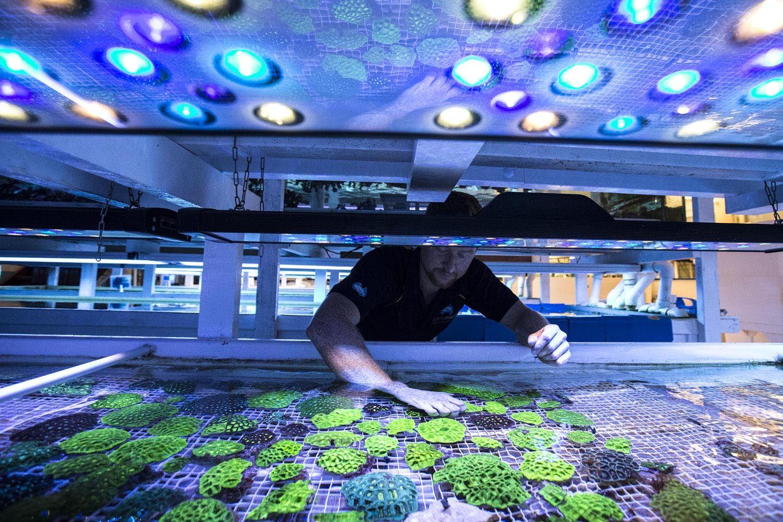 Fish for marine aquarium - Cairns Marine Aquarium Fish
