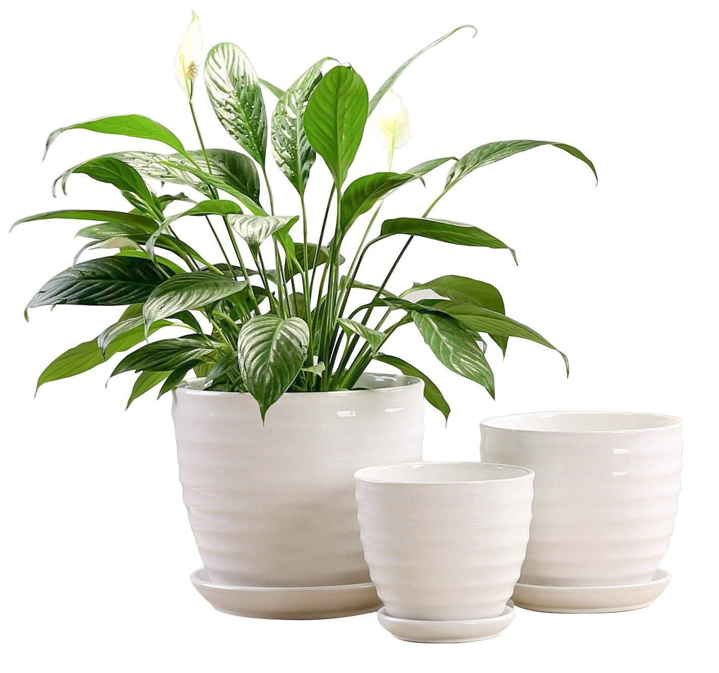 15 cheap plant pots under 20 you need in your home today