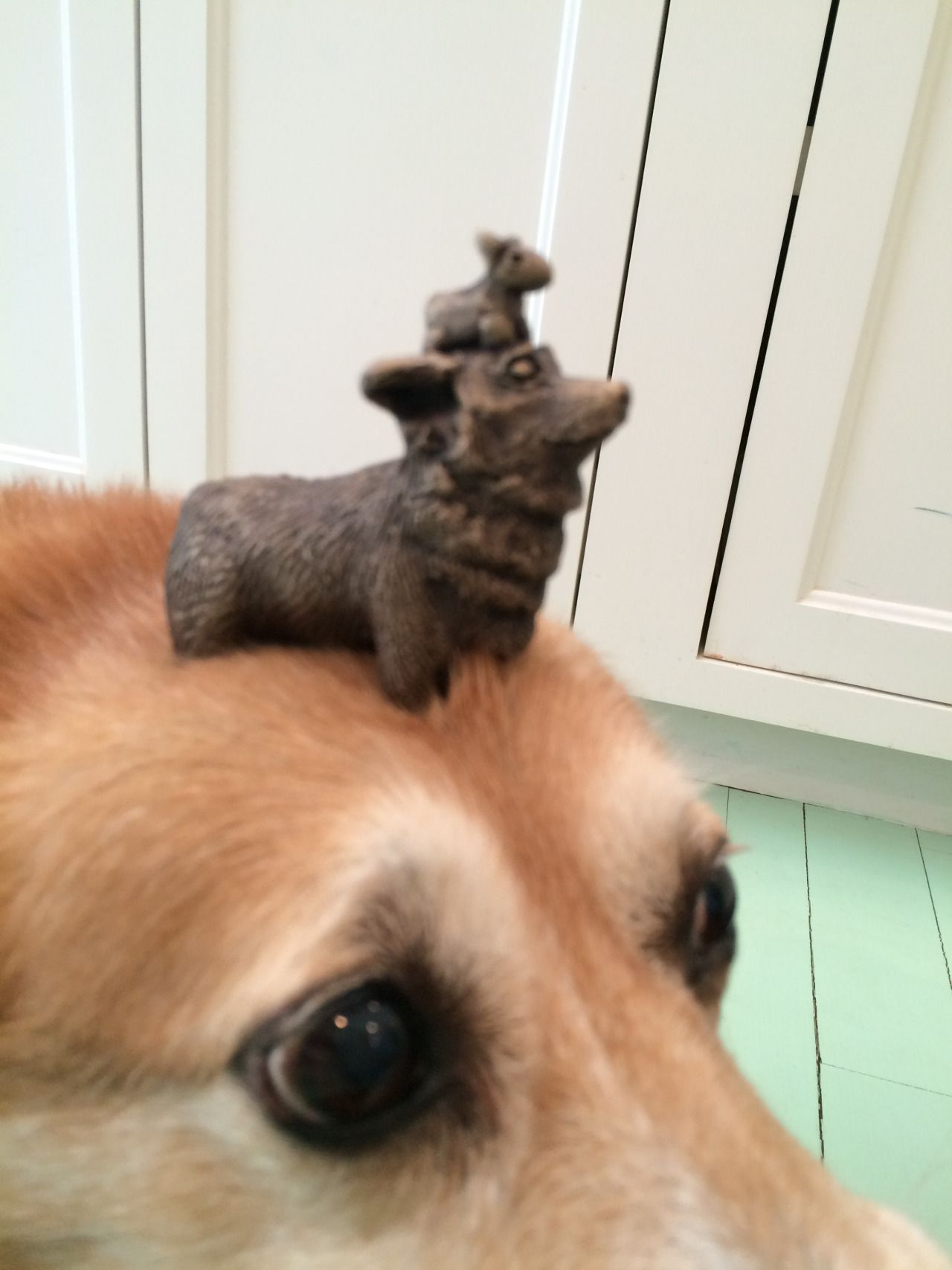 Things on Hazel's head., Thank you, thank you! Thank you many thousands of times. (To salute and thank my beloved Corgi-loving followers, a thing on Hazel's head… on Hazel's head. Special thanks to Sculptor Goody B. Wiseman at Gallery B in Castine: gallerybgallery.com