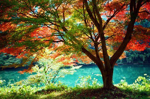 笠置峡 -ravine in the silence-