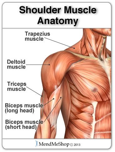 Shoulder Muscle Anatomy And The Deltoid Muscle Writing Pinterest
