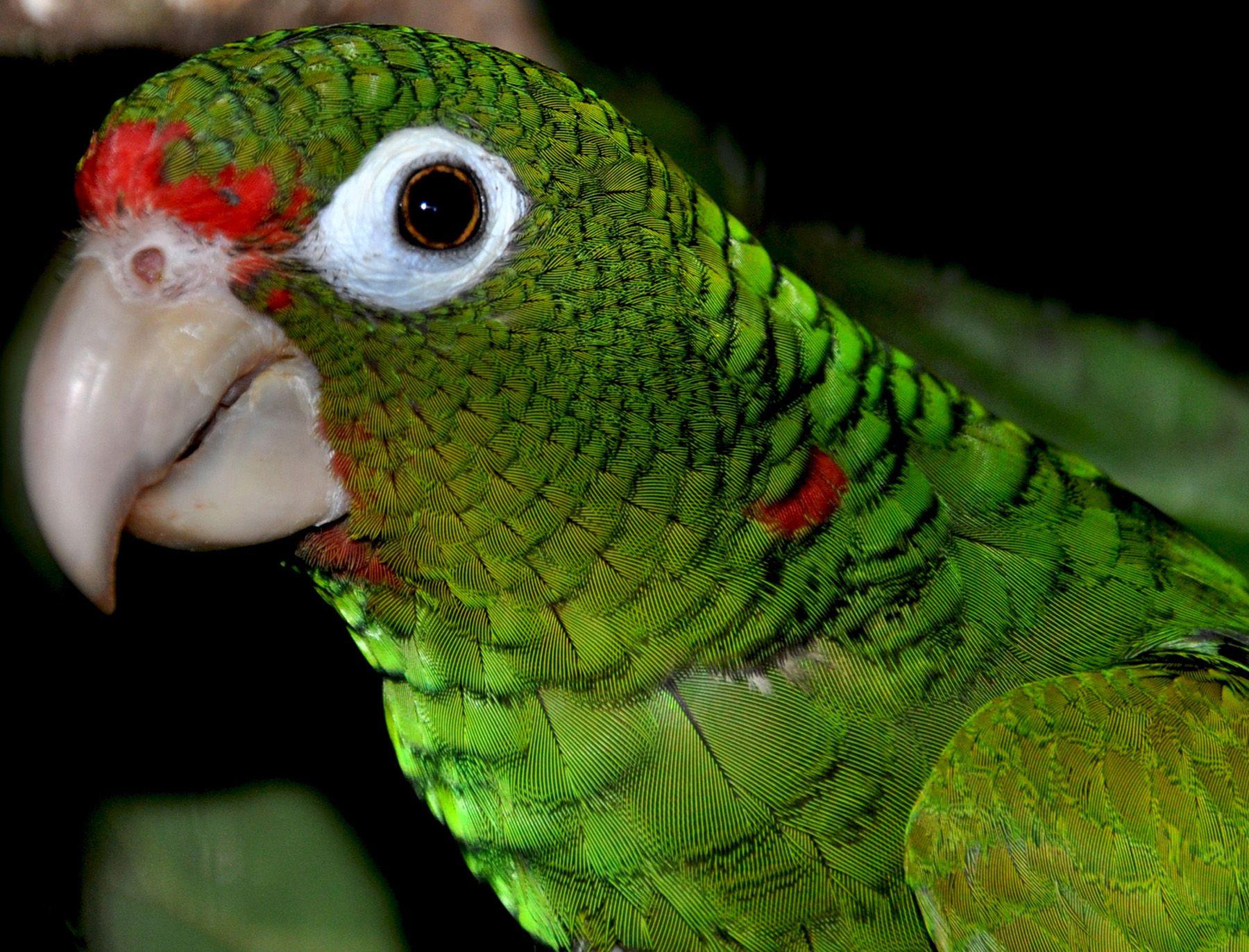 Animals in Danger of Extinction Animals, Extinction