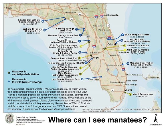 Springs In Florida Map.Where To See Manatees In Florida Map Floridawildlife Florida