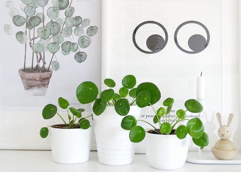salon scandinave panier rotin et plante pilea. Black Bedroom Furniture Sets. Home Design Ideas
