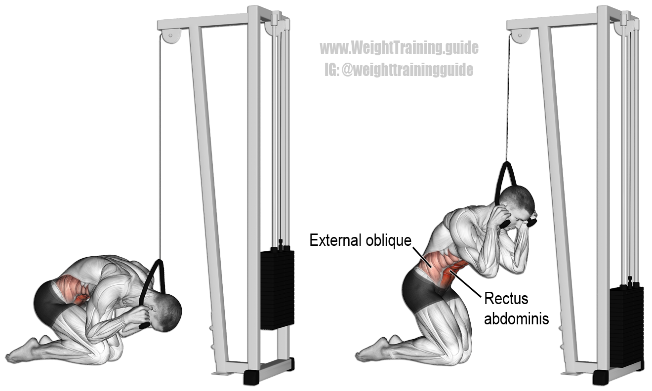 Kneeling cable crunch (con imágenes) | Entrenamiento de ...