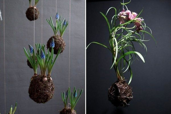 Hängekorb Blumen Gestaltung-Ideen   Plant Ideas   Pinterest   Blumen ...