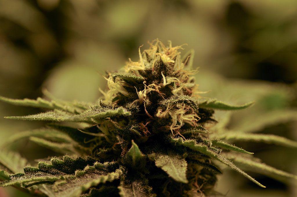 Marijuana by b4mp3r.deviantart.com on @deviantART