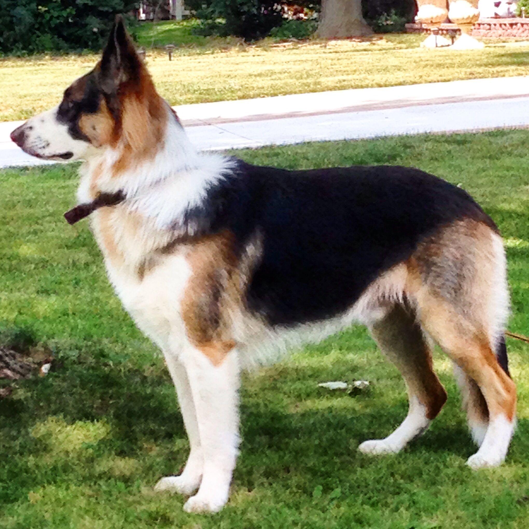 Hund Saugetier Haustier Tier Welpe Niedlich Beaglehunderassen Hund Labrador Hundewelpen Welpen Labrador Wel Welpen Hunderassen Kleine Hunde