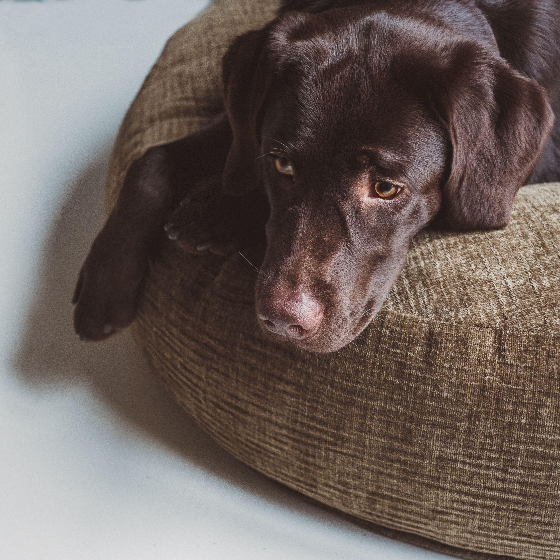 Dog Bed Pouf Boheme Moss Designer Dog Beds Sleeping Dogs Cloud7 Dog