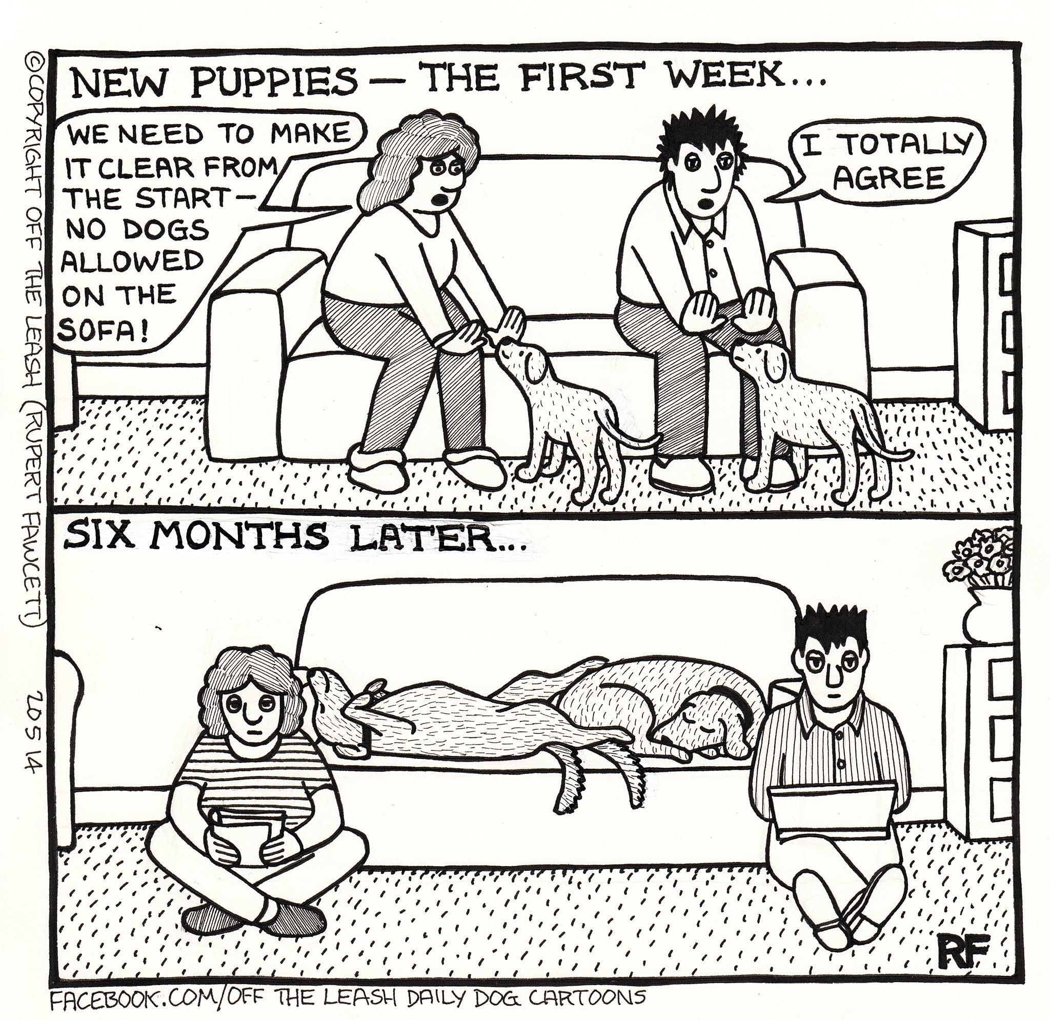 Puppies In The Uk