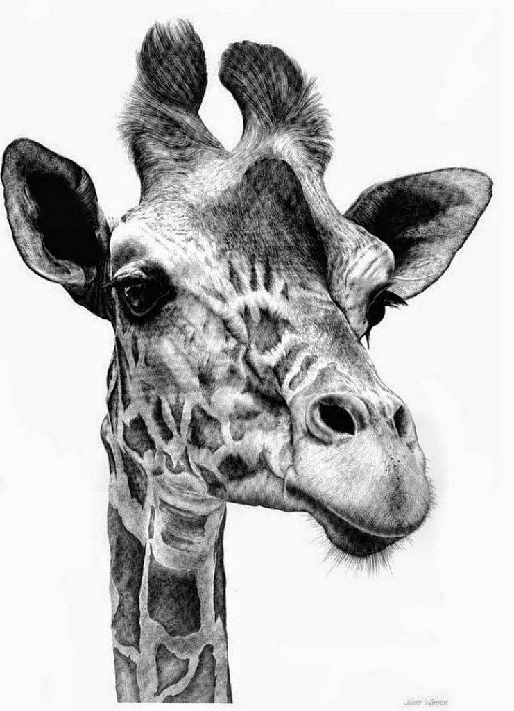 Dibujos De Animales A Lapiz Arte De Jirafas Jirafa De Peluche Dibujos De Animales