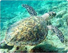 West Palm Beach Snorkeling Tours Scuba Diving Resort Courses Padi Open