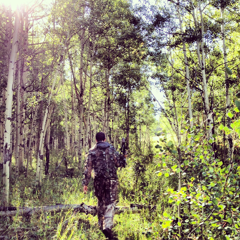 Hunting aspen in Colorado