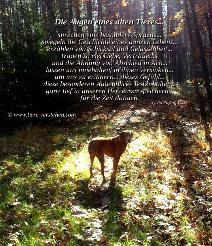 B58e46c4b55e4b0146a08251a462e329 Jpg 736 853 Spruche Tiere Zitate Tiere Hunde