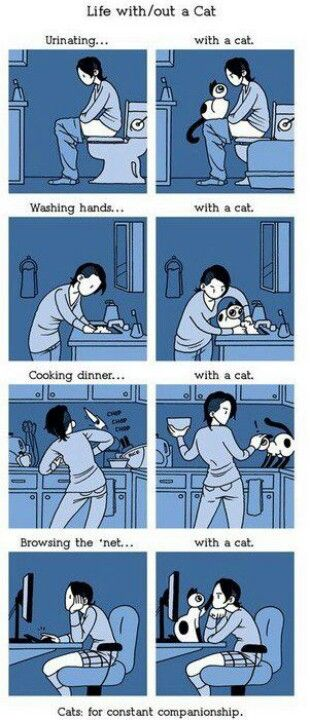 Life with/without a cat