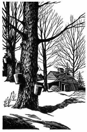 Sugar Maple By Paul Landacre Ca 1950 For Donald