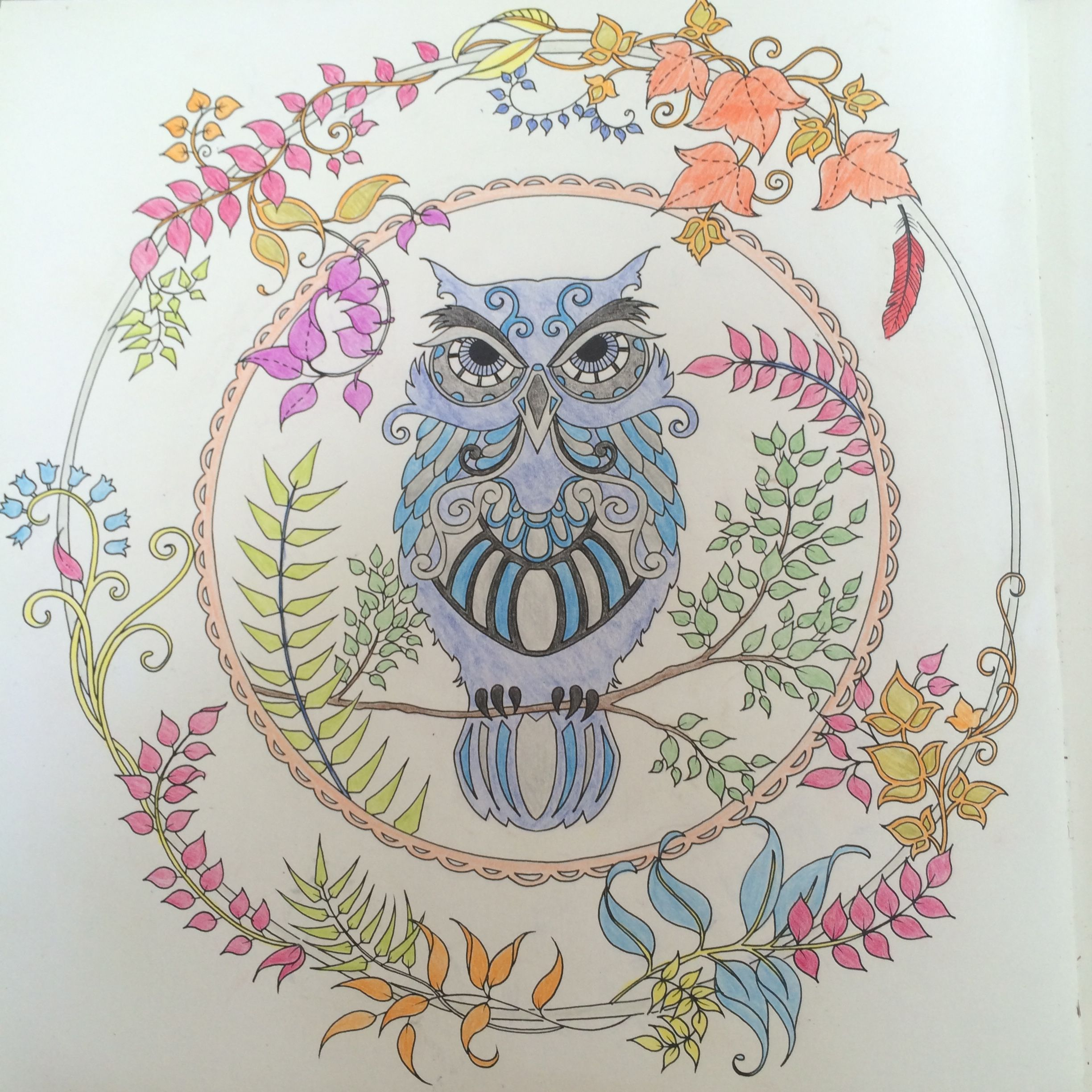 Enchanted Forest Adult Colouring Book Johanna Basford Fabercastell Enchantedforest Coloring