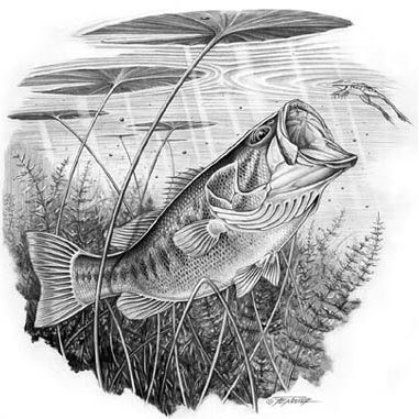 largemouthbass images   Largemouth Bass Picture   watercolor ...