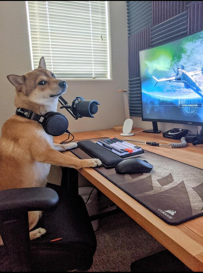 Destiny 2 Dogs : destiny, Shiba, Streamer, Playing, Destiny, Animal,, Sleeping, Animals,, Games